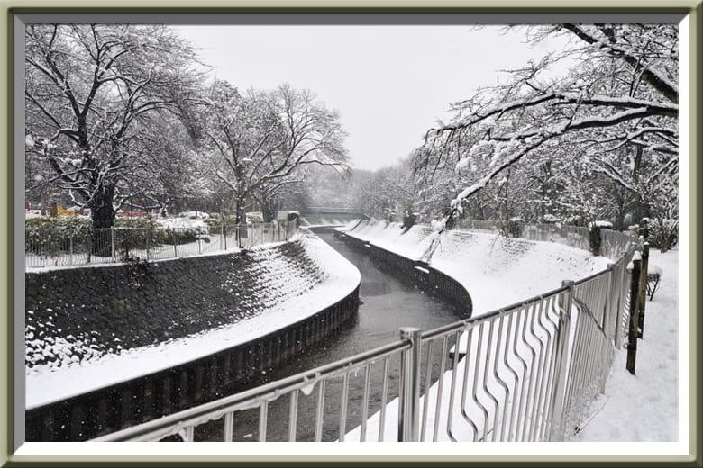 春の大雪-善福寺川緑地公園の雪景色—12.2.29—