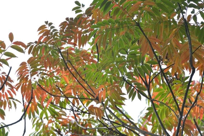 秋の訪れ   —13.11.5—