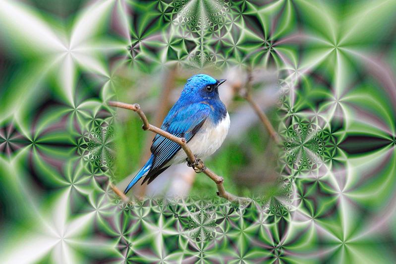 思い出の野鳥と遊ぶ・・・・—11.2.11—