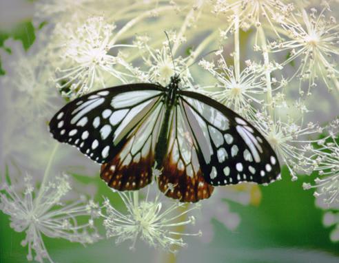 夏来なば 思い出深し 花と蝶(番外編)