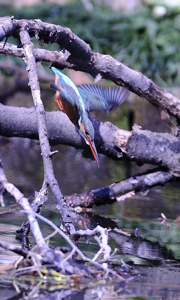 やっと本物の春が到来!春の高気圧が本州の真上。で朝早く池まで出かけました。(09.4.3)