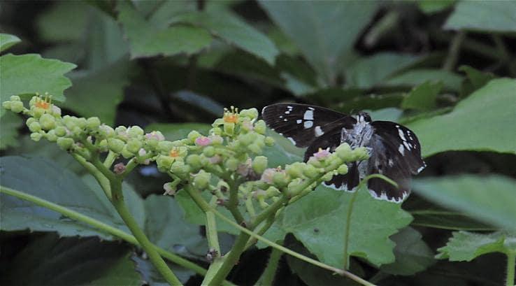 2008・8下旬 公園の蝶と小昆虫たちと風景