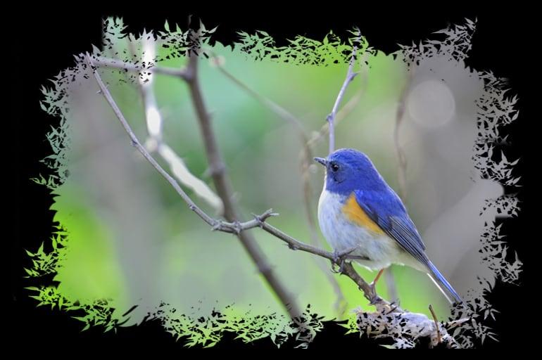 想い出の小鳥たち     —13.7.24—