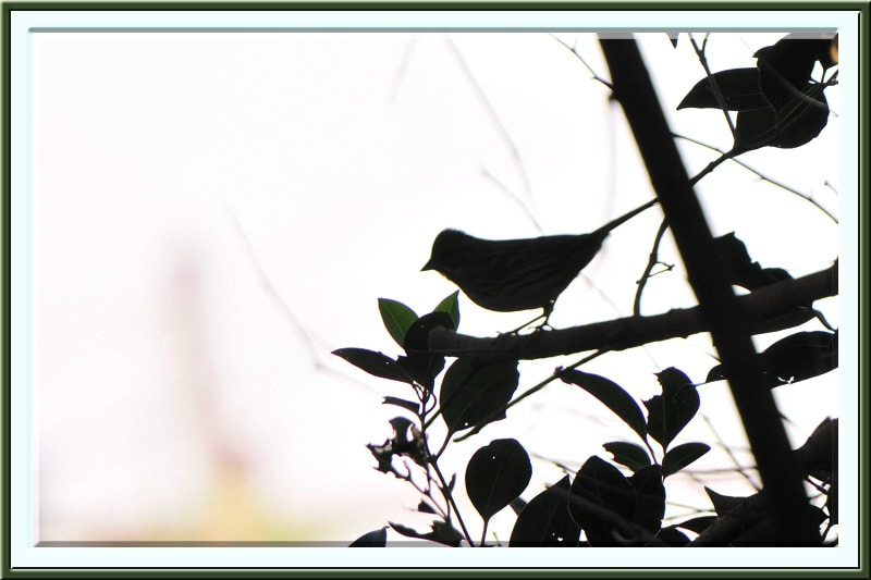 小鳥の散歩道にはいよいよ冬の小鳥が賑やかに—11.11.21—