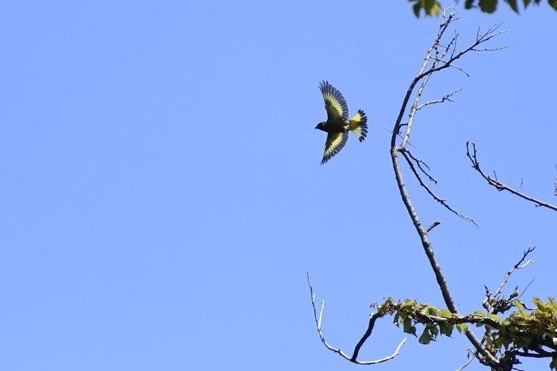 ☆舳倉島遠征第1日ー金沢県立-「健民の森」の小鳥達  —2016.4.30—