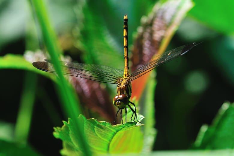 湿地の森の昆虫(蛾、クモその他)たち   —12.6.27—