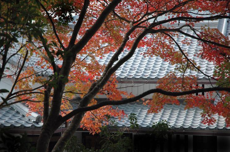 京都・三千院訪問、京都XIV寸描(番外編)—2007.11.20—