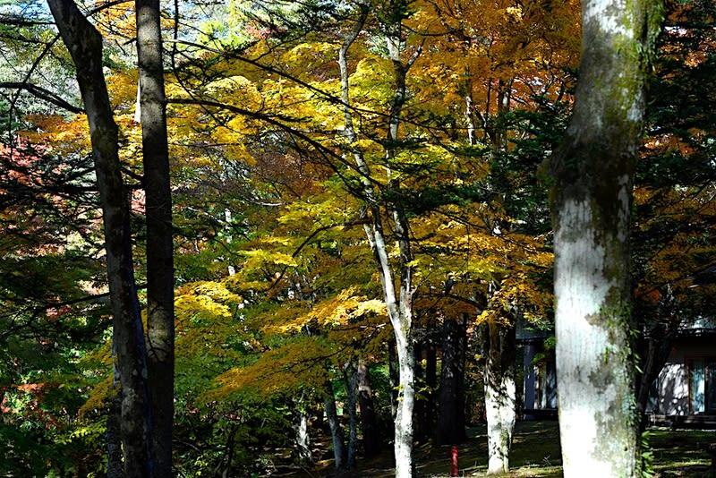 軽井沢-旧軽地域〜雲場池の紅葉=その❸    —2017.10.28—