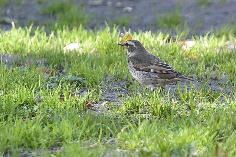冬の野鳥  —14.12.3—