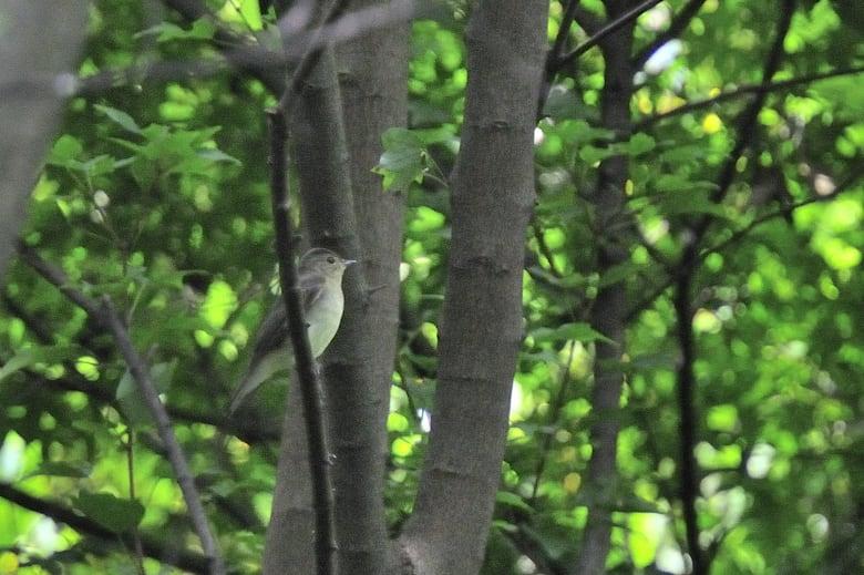 池辺にヒタキ類の小鳥(キビタキ♀、コサメビタキ、サメビタキなど)が登場  —10.9.30—
