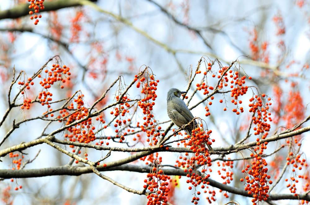 初冬の和田堀は鳥たちも活発!(08.12.16)