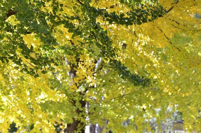 和田堀は秋真っ盛り   —2012.11.25—