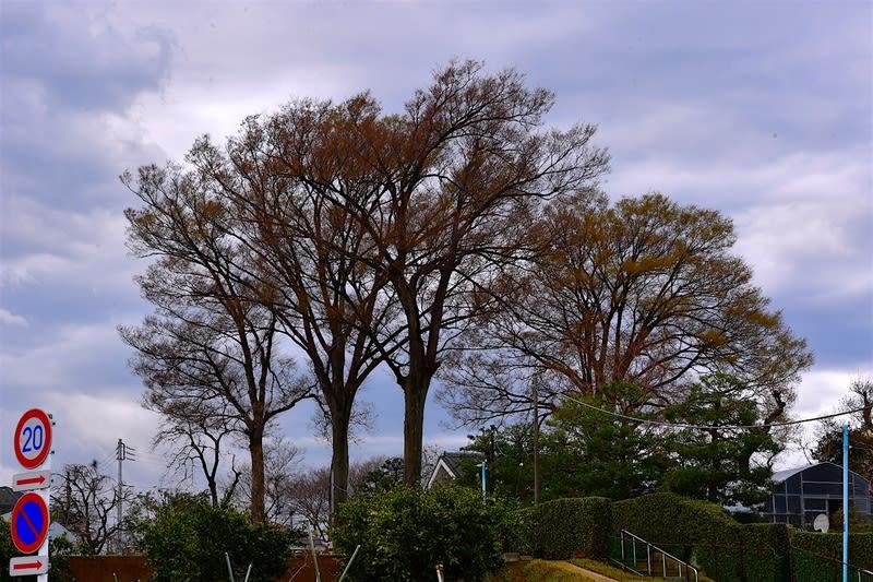 早春善福寺川界隈の風景                             — 2018.3.22—