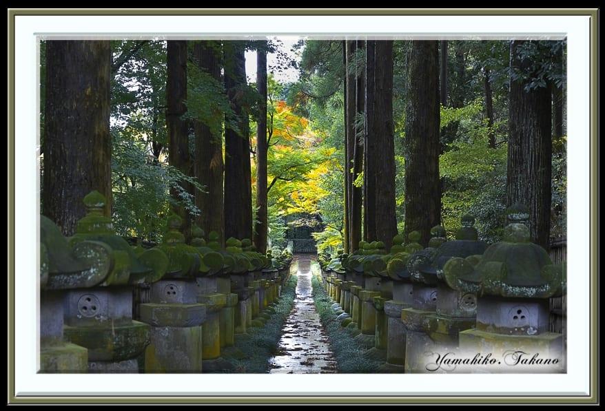 平林寺の秋を散策  —15.11.26—