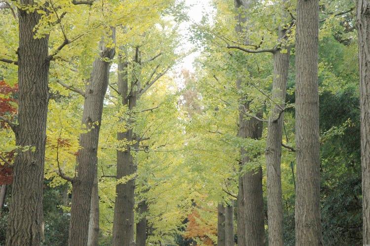 2007年11月~12月の東京・荻窪・大田黒庭園の紅葉—2007.12.02—