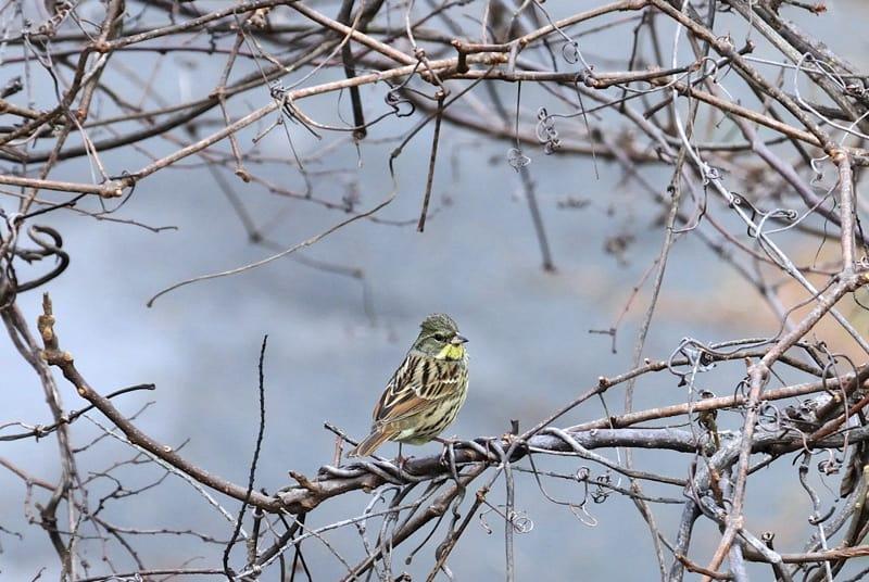湯河原の小鳥たち(09.2.15~16日)—(番外編)