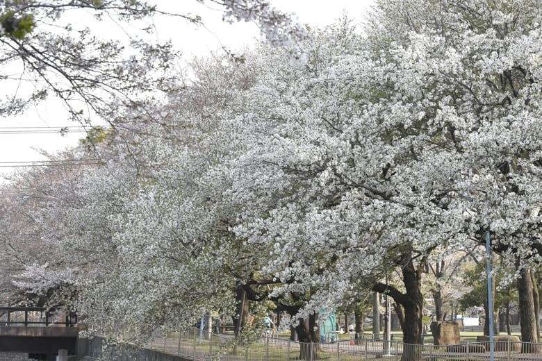 今日の善福寺川界隈      —14.4.8—