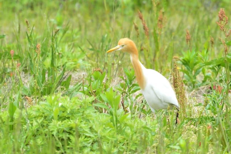 舳倉島の初日に出会った野鳥たち      —2013.5.14—