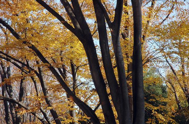 善福寺川界隈では最も遅い紅葉のスポット 成田西憩いの森 —2007.12.12—