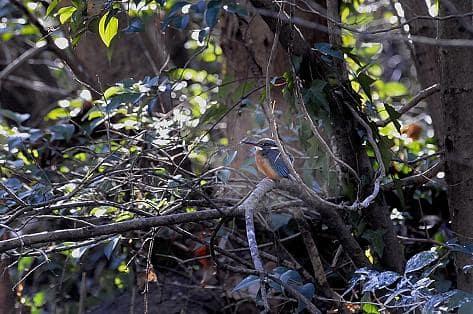 東京でも昼間の気温が1℃の猛烈寒波でも鳥には日々の生活がある。—2008.2.13—