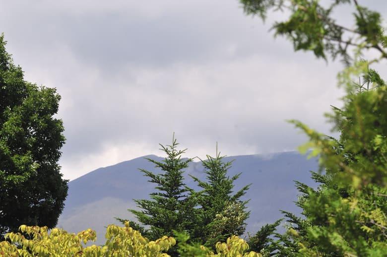 中軽井沢千ヶ滝西地区の夏の小鳥達   —10.8.28~30—