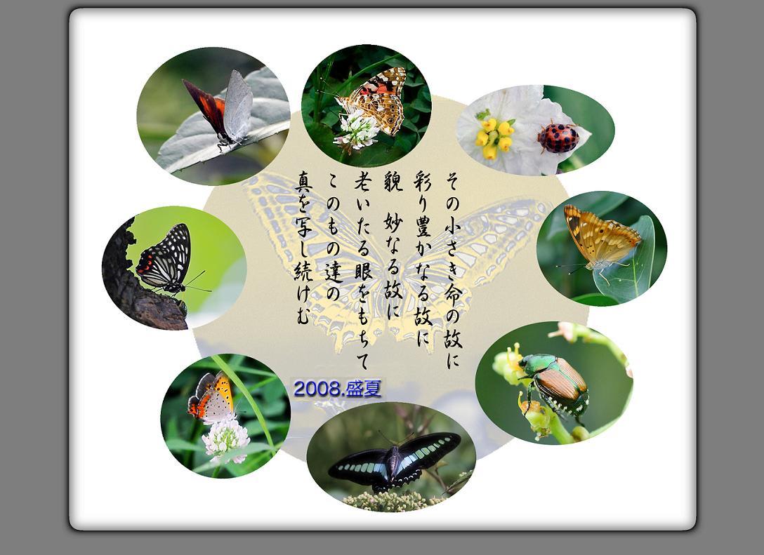 2008.8猛暑の公園の生き物たち