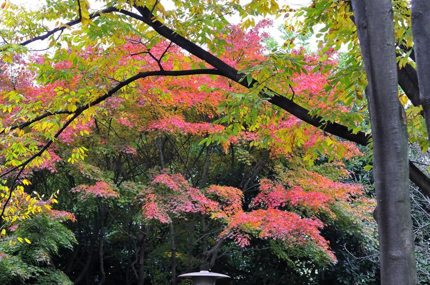 暖冬の中、ようやく秋が公園にも来ました。 09.11.27